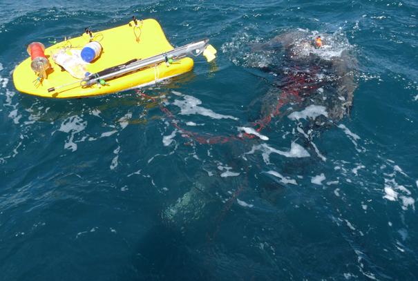chasse sous marine à la  palme - trophée FNPSA